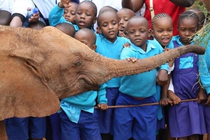 david-sheldrick-orphaned-elephant-centre