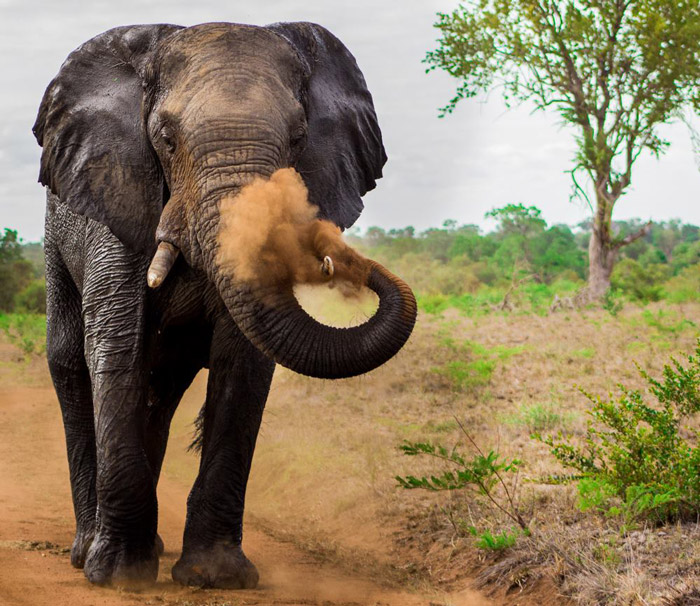 The perfect moment is seldom just occurs because of sheer luck. This stunning pic of an elephant was captured at just the right moment by Marius Zeilinga
