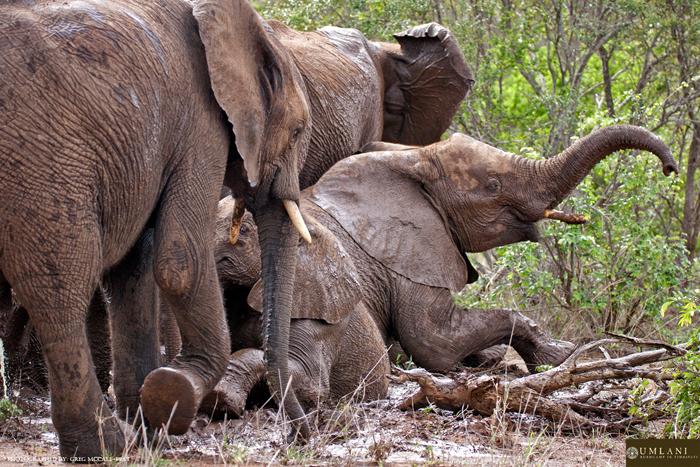 elephant-family-fun