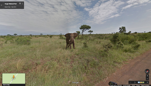 An elephant grazing in Kruger National Park, South Africa