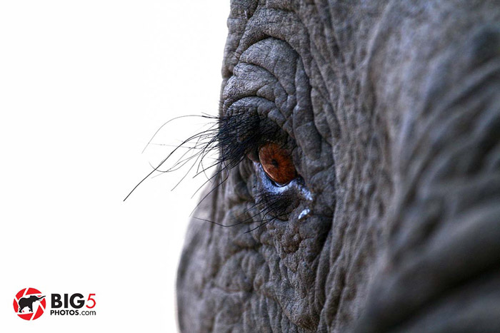 elephant-photos-safari