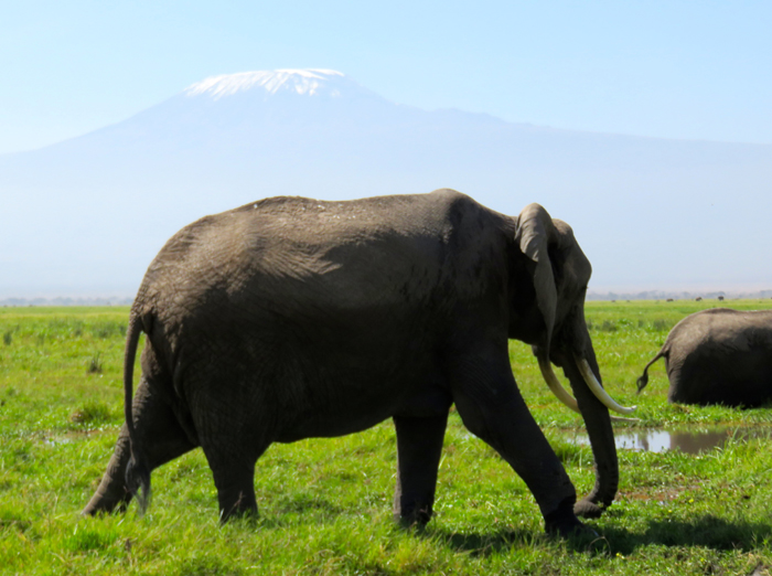 elephants-at-kilimanjaro
