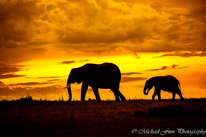 elephants-maasai-mara