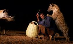 hyena-feeding-time