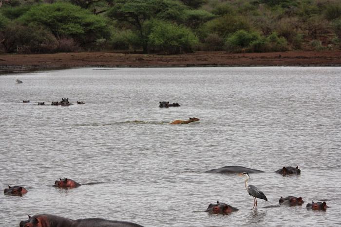 impala-crocodile-sunset-dam-kruger