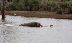 impala-hippo-sunset-dam-kruger