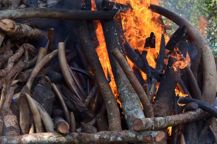 ivory-burn-malawi