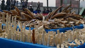 ivory-china