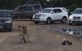kruger-lion-romote-controlled-car