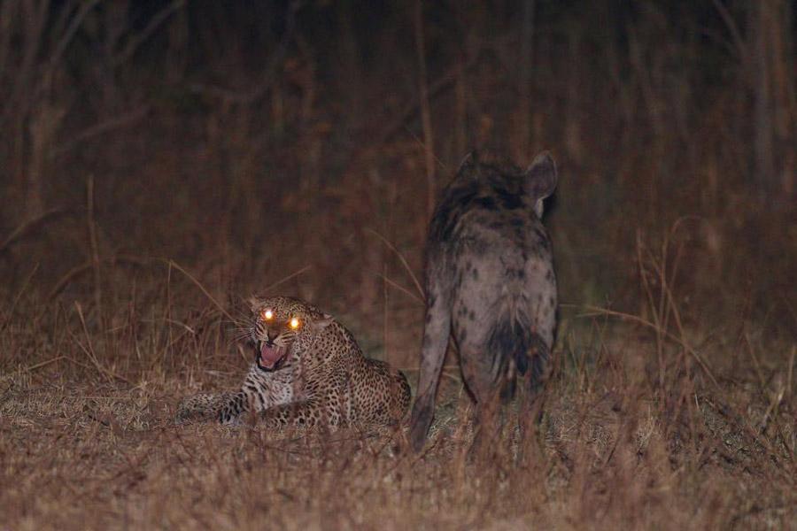 leopard-hyena-south-luangwa