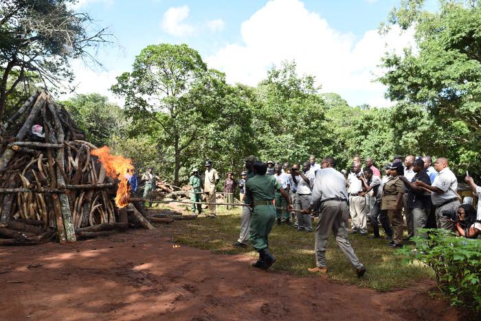 mzuzu-ivory-burn
