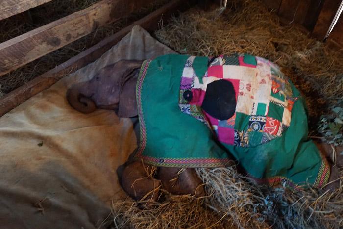 orphaned-elephant