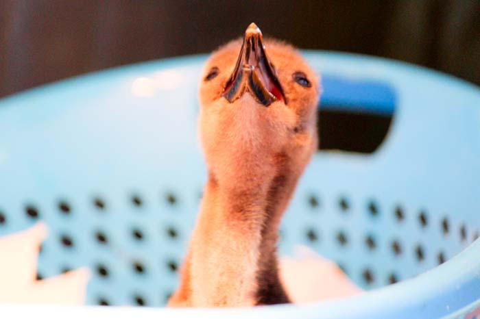 penguin-feeding-time