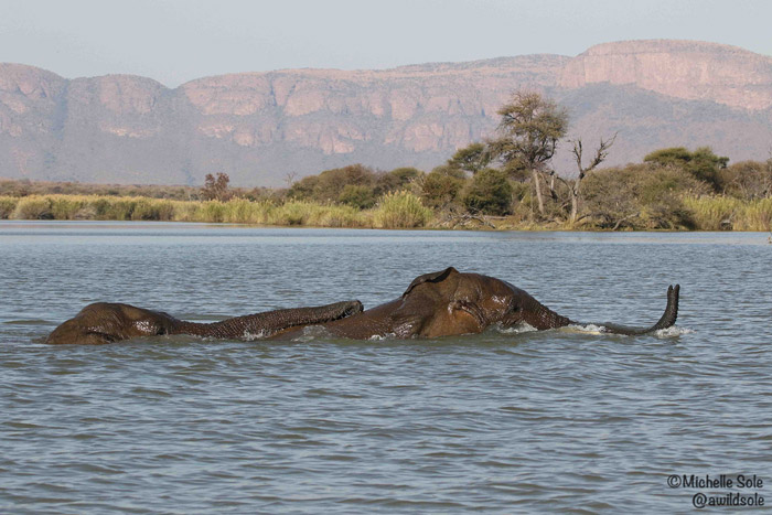 two-elephant-bulls-playing-in-water