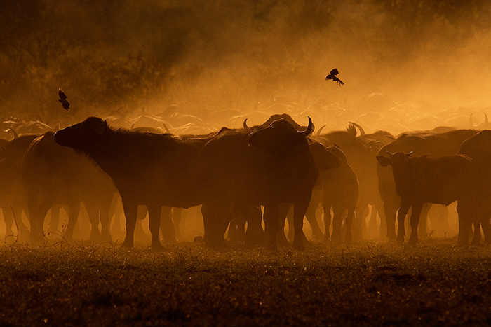 5 tips for mastering the magic of Africa's golden hour