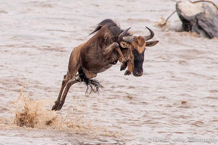 wildebeest-maasai-mara
