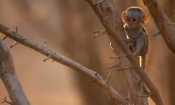 Baby-monkey-morning