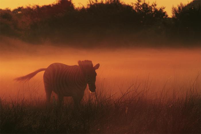 Beverly_Joubert_Zarafa_Wildlife_Botswana