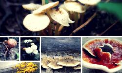 Blooming Mushrooms