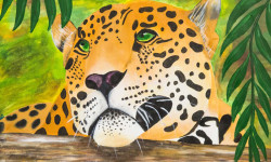 Cape-Leopard-Trust_art
