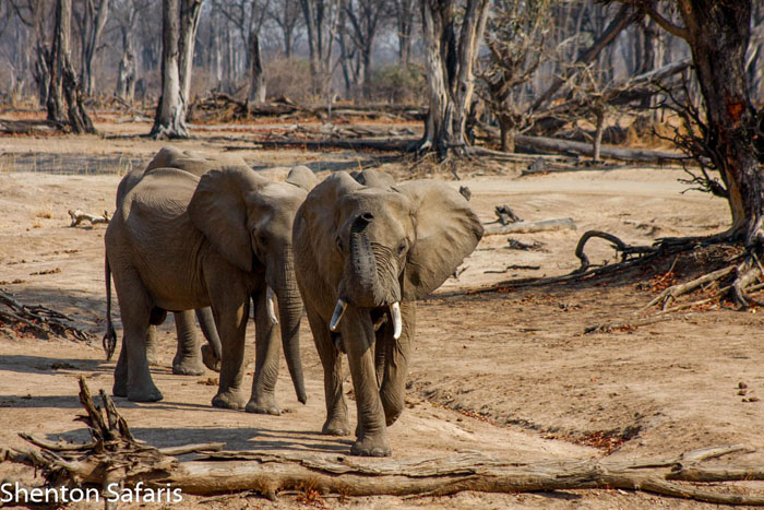 Elephants-in-the-forest