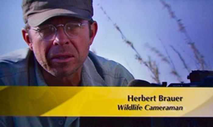 Herbert-Brauer