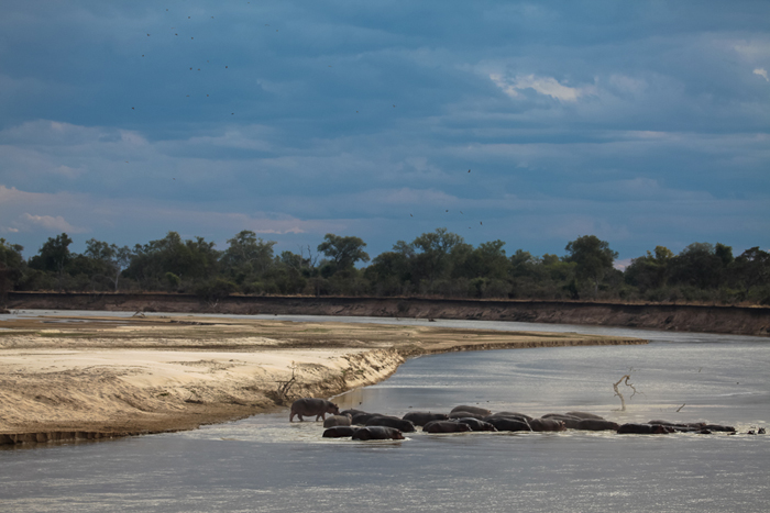 Luangwa-river-and-hippo-pod