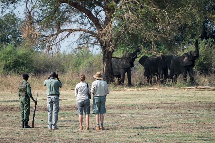 Walking-safari-Robin-Pope-Safaris