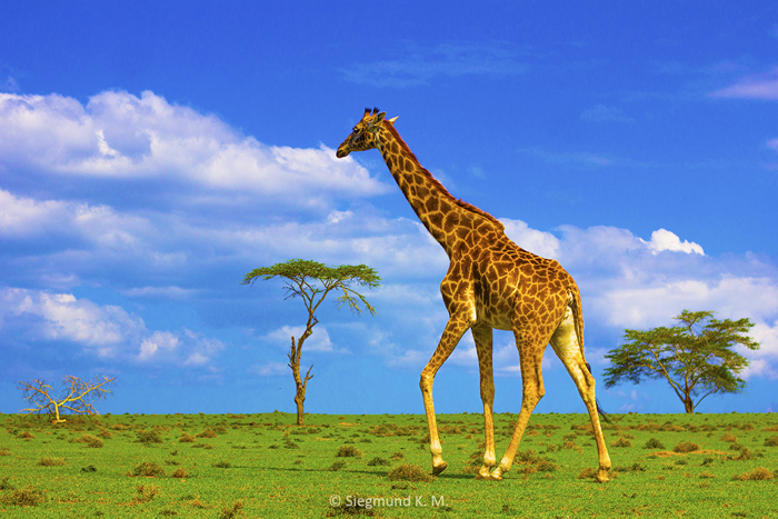 Wildlife-at-Crescent-Island-Naivasha