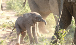 adorable-baby-elephant