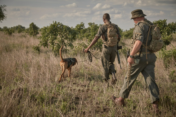 The canine unit makes a significant contribution in the fight against rhino poaching ©Ravi Gajjar for Rhino Tears