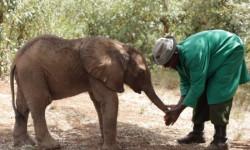 baby-elephant-trunk-massage-david-sheldrick