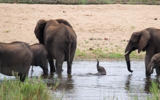 baby-elephant-trunk