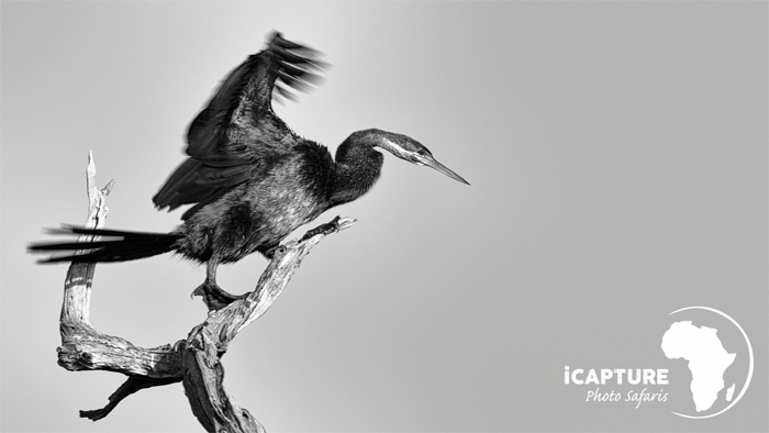 bird-in-black-and-white