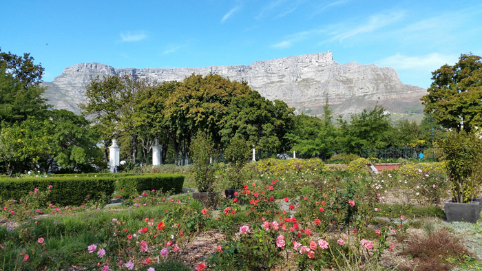 5 reasons to visit Cape Towns Companys Gardens Africa Geographic