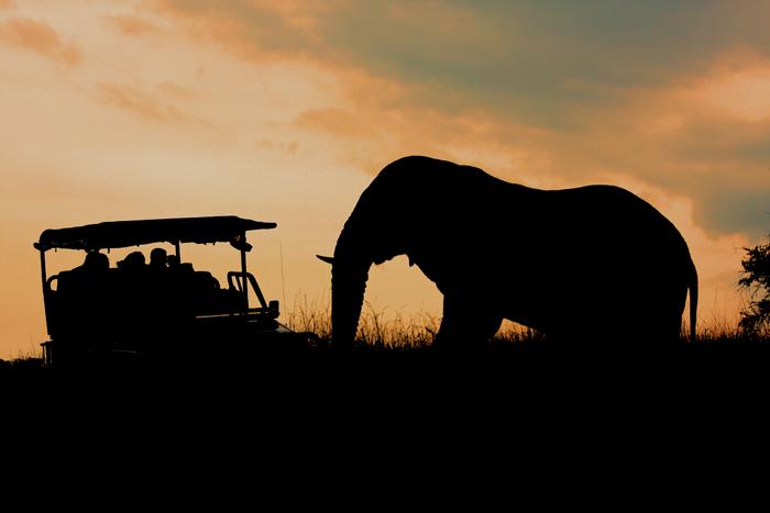 elephant-at-sunset