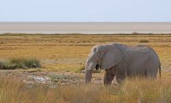 Elephant in Etosha ©Janine Avery