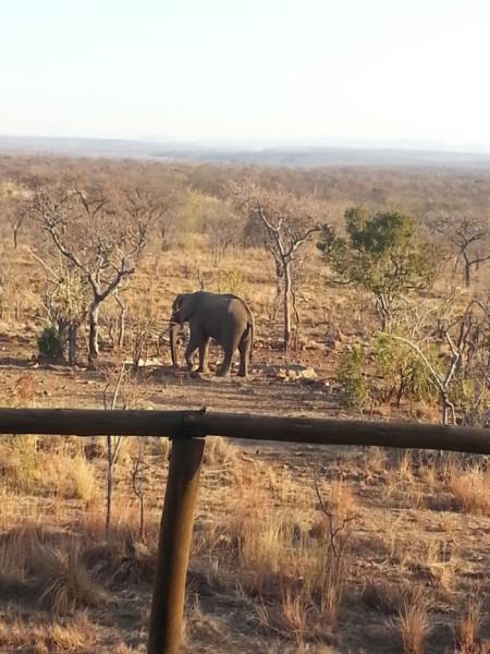 elephant-from-balcony
