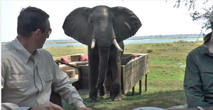 elephant-interrupts-breakfast