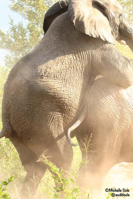 elephant-mounts