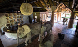 elephants-passing-through