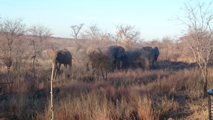elephants-sephiri-tours