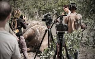 filming-stroop