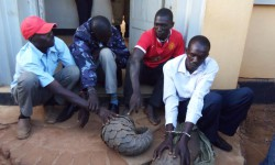 four-arrested-pangolin-smuggling