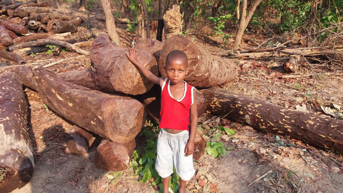 illegal-logging