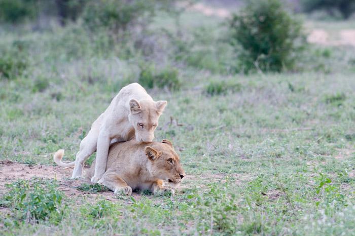 ©Jen Squillario/safaribugs