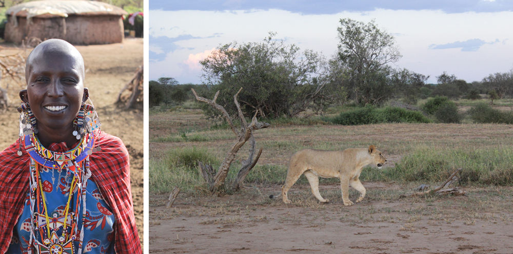A Maasai woman in Amboseli (left) - The Kikuyu may be the largest ethnic group in Kenya but the Maasai are the most world renowned thanks to their deep rooted culture and traditions; Our first big cat sighting (right) ©David Winch