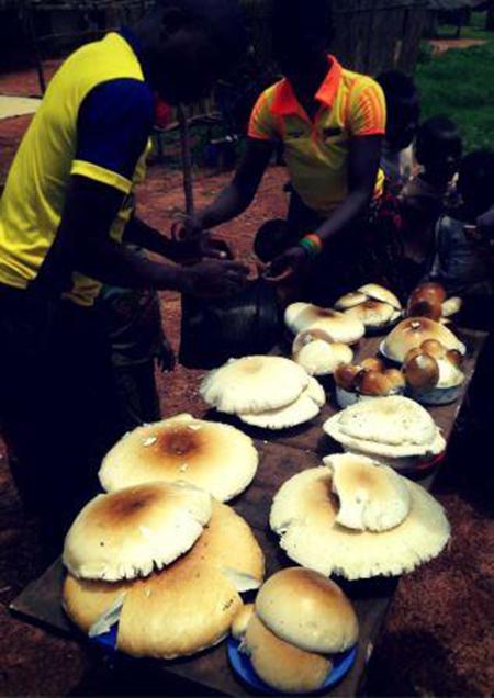 mushrooms market resized