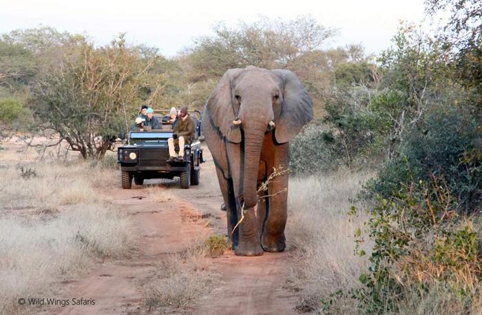 on-safari-with-elephants