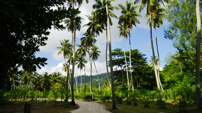 palm-trees-seychelles